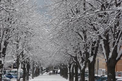 Aosta. Viale innevato.
